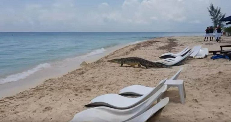 Be Aware The Next Time You're On A Cozumel Beach!