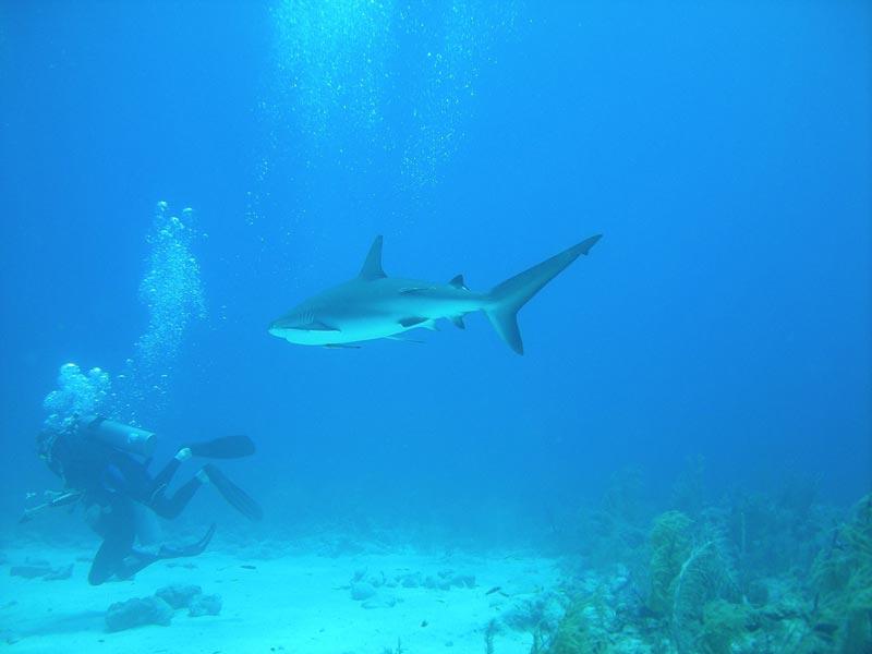 Sharks on Nassau Tour