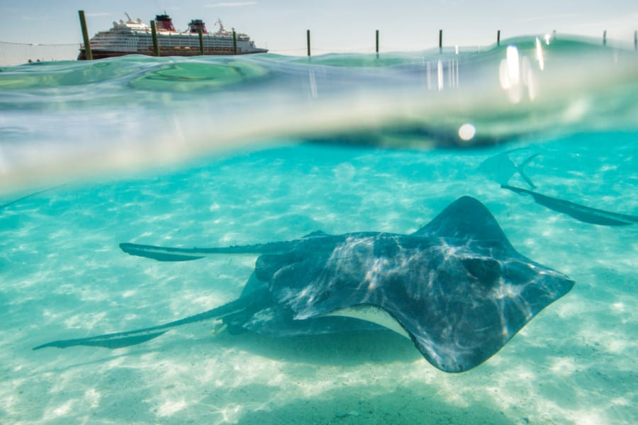 Southern Stingrays in a private lagoon