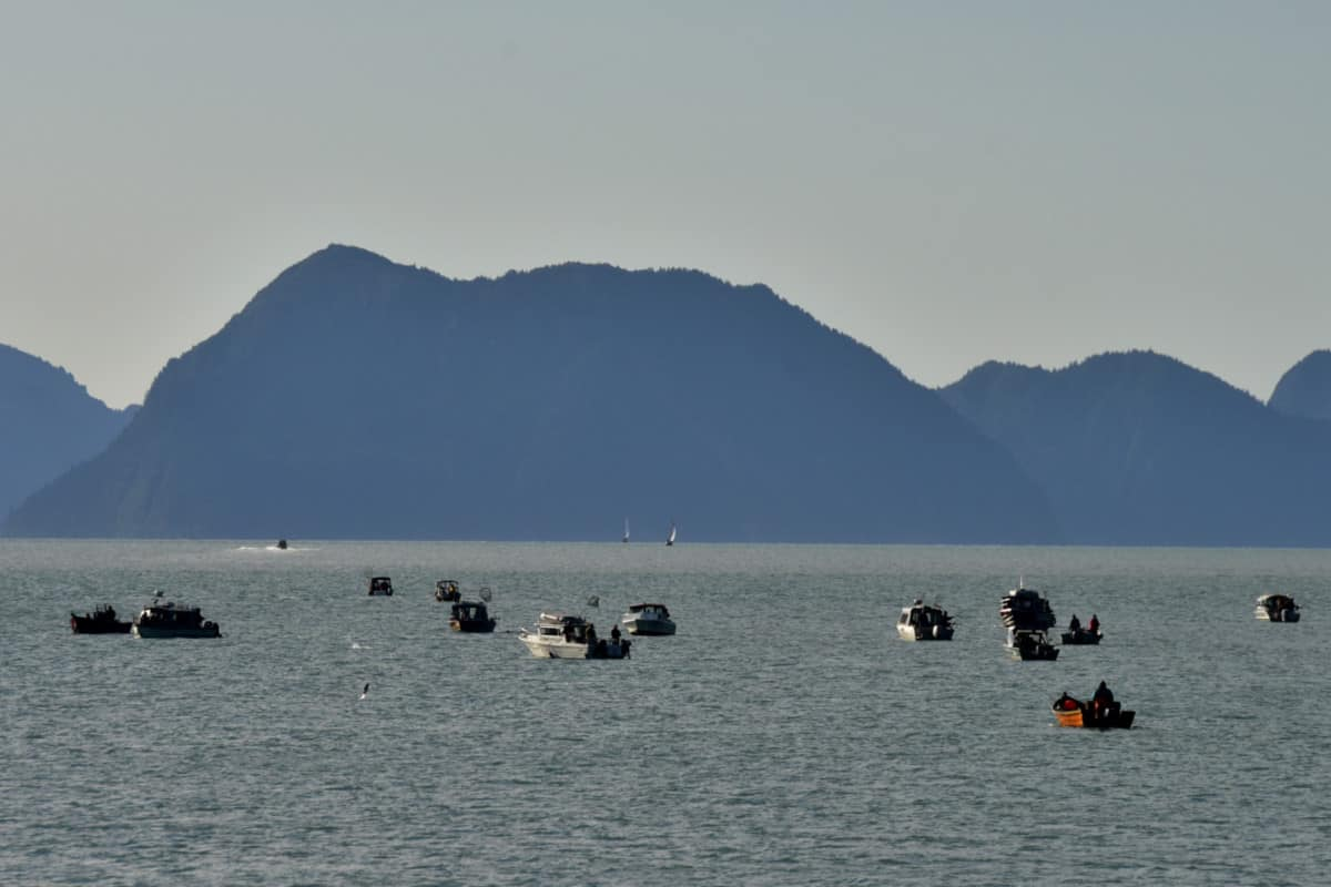The Silver Salmon Derby in Resurrection Bay
